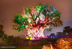 Tree of Life Awakenings at #AnimalKingdom Disney 2016 (Mickey Views) Tags: disney treeoflife animalkingdom tree hdr night nightphotography 2016 2016disney waltdisneyworld wdw disneyworld disneyphotography awakenings nighttime