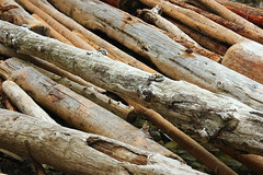 Driftwood (yotam.fogelman) Tags: driftwood wood trees beach