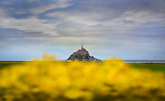Le Mont-Saint-Michel hidden behind the rapeseed ( Wim ) Tags: nikonflickraward wimgoedhart goedhartontwerp nikon detail montsaintmichel yellow rapeseed horizon fortress burcht coast kust france bretagne nikkor sunset sunrise