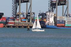 Sailing Boat - Harwich 23-09-2016 (routemaster2217) Tags: harwich sea ocean sailingboat