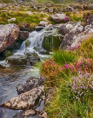 Rugged (Lee~Harris) Tags: wales snowdonia landscape rocks water flow flowing growth uk outdoor stream waterfall creek flowingwater nature