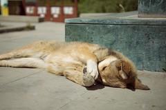 Doggy <3 (M.Boubou) Tags: georgia travel mountains dog wild cute fluffy city