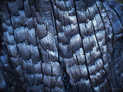 Charred tree trunk_c (gnarlydog) Tags: charred black dark fire detail tree trunk texture wooddetail closeup abstract kodakanastigmat63mmf27 australia shallowdepthoffield organic