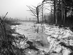 January Thaw (Boneil Photography) Tags: blackandwhite ice silhouette fog canon landscape ma powershot s90 haverhill boneilphotography brendanoneil