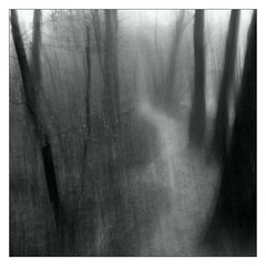 ind i skoven / into the wood (Mette Mller) Tags: wood blackandwhite path icm intentionalcameramovement