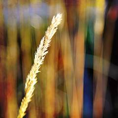 in your face (1crzqbn) Tags: sunlight color macro texture nature grass square shadows bokeh windy 7d shining hypothetical ♥ tistheseason inyourface artdigital idream shockofthenew trolled memoriesbook awardtree magicunicornverybest crazygeniuses exoticimage 1crzqbn netartii galleryoffantasticshots happybirthdaykace