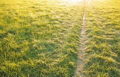 Memory of autumn (romizaj) Tags: autumn sun green fall grass yellow sunrise way bright sigma sunbeam foveon dp1