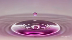 Purple (Erika Montoya) Tags: food abstract macro water colors canon droplets waterdrop colorful purple ripple flash gray drop 100mm drip coloring splash waterdrops liquid 100mmmacro erikamontoya erikamontoyaphotography