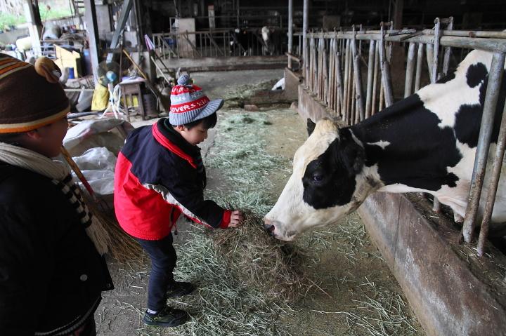 苗翔牧場(牛奶的故鄉)020