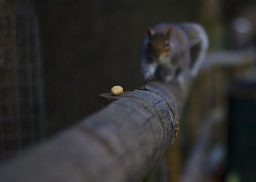 Going nuts ©  Still ePsiLoN