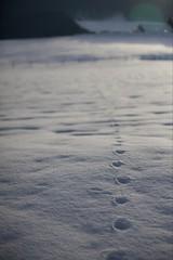 footprints in the snow (sandroo) Tags: mountain snow canon italia neve montagna orme tamron2875 piancansiglio 5dmkii 5dmk2 photowizardeditor