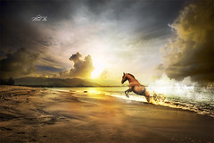 Golden Horse (maan.pho) Tags: morning trees sunset sea sun beach nature night landscape