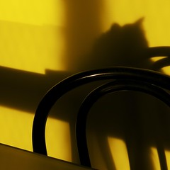 So absent (*ZooZoom) Tags: light shadow yellow cat square table chair away xp absent ontheturningaway so differenttiming soabsent