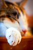 Hand cat (Juan Antonio Capó) Tags: pet animal cat kat feline chat bokeh pussy kitty gato felino katze mace 猫 gatto חתול mascota kot gat kočka kedi gatito kissa köttur mačka kucing pusa ぼけ mèo moix گربه кошка kitti 고양이 minino γάτα ボケ мачка котка pisică แมว قط 散景 боке кішка 잭 マヨルカ島 קאַץ վալետ िल्ली バレアレス諸島