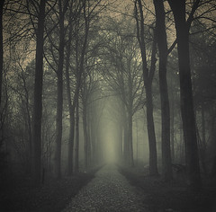(sole) Tags: road blackandwhite mist holland misty dark landscape nevel bomen europe moody fotografie bosque dreamy bos almostblackandwhite niebla dreamscape drenthe weg dreamjournal landschapsfotografie sole carmengonzalez weggetje carmengonzalezphotography ofportalsandparallelworlds