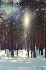 Ахунский лес