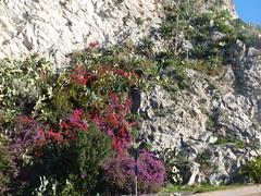 Taormina - Capo Taormina (Luigi Strano) Tags: italy europa europe italia sicily taormina sicilia messina sicile sizilien италия европа сицилия таормина