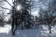 The Morning After (SunnyDazzled) Tags: blue winter sky white snow newyork storm man tree sunshine nemo branches working cleanup after orangecounty blizzard snowblower moning