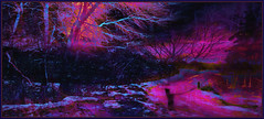 Winter Night Road (Tim Noonan) Tags: road pink blue trees winter light sky snow painterly black colour tree texture ice night digital photoshop mood branches illuminated hypothetical vividimagination shockofthenew trolled stickybeak newreality expressionisim sharingart maxfudge awardtree maxfudgeawardandexcellencegroup magiktroll exoticimage digitalartscene netartii vividnationexcellencegroup