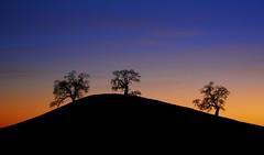 Three Oak Knoll in Silhouette (ernogy) Tags: california ca sunset sky usa tree silhouette northerncalifornia landscape oak folsom sacramento knoll ernogy