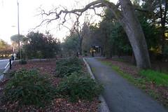Markham Nature Park and Arboretum (Concord, California) (cseeman) Tags: california trees nature birds parks sunny redwoods paths concord bushes shrubs naturepark publicgardens publicparks arboretums californiaparks markhamnatureparkandarboretum markhamnatureparkconcord californiaarboretums