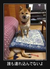 誰も連れ込んでないよ #犬 #ペット #嘘 (Demochi.Net) Tags: life cute sexy japan fun japanese motivator culture 日本 ペット 猫 demotivator 金 家族 結婚 ゲイ 女 子供 おっぱい 愛犬 政治 社会 巨乳 文化 眼鏡 教育 demotivators 経済 女性 初恋 r18 女子 カップル 子猫 女装 お笑い motivators 会社 少子化 企業 ユーモア 恋 悪い 格差 風刺 一言 デモチ 大喜利