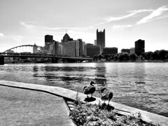 Pittsburgh, PA (JayCass84) Tags: city bridge urban blackandwhite bw water beautiful skyline skyscraper buildings river landscape pittsburgh skyscrapers pennsylvania awesome ducks urbanlandscape urbanphotography 412 instagram instagramapp