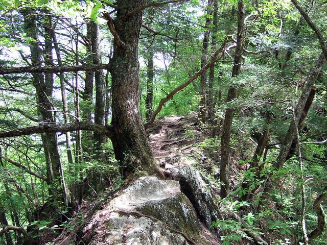 山肌を写しているわけではなく、一応ここも登山道です。|尾白川渓谷