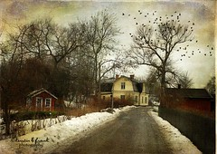 This Long  Winter (Kerstin Frank art) Tags: trees winter sky snow texture birds buildings oldbuildings lngholmen skeletalmess lesbrumes magicunicornverybest kimklassen kerstinfrank kerstinfranktexture
