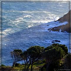 Ligne de partage (bleumarie (sans connexion jusqu'au 22/06)) Tags: nature pins vert ombre bleu vague falaise roussillon arbre houle cerbère catalogne pyrénéesorientales littoral mfcc suddelafrance meragitée cappeyrefite bleumarie mariebousquet méditerranéemer photomariebousquet