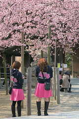 RKB Snappy (tomosang R32m) Tags: japan radio shrine tea ceremony  cherryblossom sakura fukuoka  snappy nodate    rkb fukuma  miyaji   tsuyazaki miyajidake fukutsu     cerasuscerasoides
