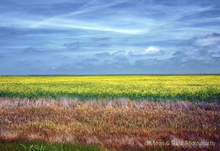 Field of Plenty