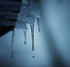Ice was nice (EXPLORED) (Lisa Karloo) Tags: blue winter color ice water outdoors frozen spring nikon melting frost drop icicle d600 lisakarloo