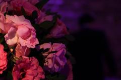 Rosas (Andreza Menezes) Tags: wedding roses brazil espelho brasil bride rosa happiness casamento recife vela rosas decorao mos pernambuco doces marrom felicidades fotoclube bemcasado bolodenoiva dibranco marcelaeandr canont4i cakemarriage
