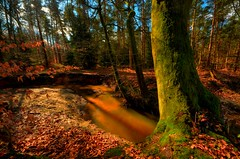 Rammelbeek im Bentheimer Wald 4 (Sunstonecruiser) Tags: trees winter shadow color art rural landscape deutschland landscapes countryside photo eiken bomen surreal atmosphere unfound uitzicht agriculture aussicht desolate landschaft sonne schatten baum landschap badbentheim zonlicht ilmenau eiche photomix platteland bossen deutscherwald grafschaftbentheim fruhling landscapedreams deutschelandschaft rememberthatmomentlevel1 rememberthatmomentlevel2 rememberthatmomentlevel3 besteverexcellencegallery