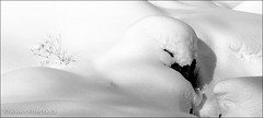 Snow Dove (_Critterpix) Tags: winter snow shadows natural dove snowpatterns naturescreations