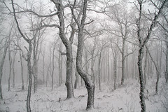 IMG_1446 (berserker170) Tags: nieve snow winter invierno guadalupe montaña mountain tree arbol ice hielo flickrexploreme