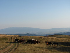 / Wild horses (Deian Vladov) Tags:                 chevaux horses landscape paysage vue view sky ciel road dirtroad chemindeterre chemin summer balkan balkans bulgarie bulgaria europe europa staraplanina grandbalkan collines hills montagne mountain champ boukovets meadow bulgria blcs golmaplanina t pr pelouse prairie