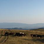 Диви коне / Wild horses thumbnail