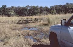 Botswana 2004 (patrikmloeff) Tags: afrika afrique african afrikanisch travel reisen reise traveling voyage erde earth welt world monde terre beautiful botswana africa ferien urlaub holiday holidays safari abenteuer adventure moremi moremigamereserve nationalpark np moreminationalpark moreminp analog analogue sommer summer ete southernafrica minolta car voiture auto sumpf landschaft landscape paysage