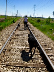 IMG_0212 (SpiderMiau) Tags: rottweiler walk dog play bark calgary alberta