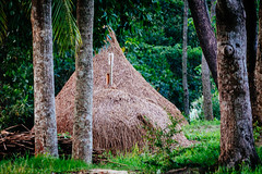 Hay Stacks! (Curious ClickZ) Tags: traditional hay stacks trees leaves frame bangladesh beautiful canoneos70d landscape