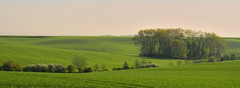 Evening light (Alena Adamcov) Tags: czech landscape light countryside nature nikon d3300