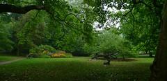 Botaniska trdgrden (Ken-Zan) Tags: botaniskatrdgrden visby gotland green nature trees lamm kenzan ljunghav trd blommor smrgrdsbord