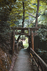 (Corblate) Tags: trees landscape forest japan kyoto tori templs outside natural light nikon d5100