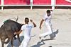 Finale du Crochet d'Argent - Fontvieille 2016 (amcadweb) Tags: taureau camargue camarguaise course fontvieille arles arlésienne