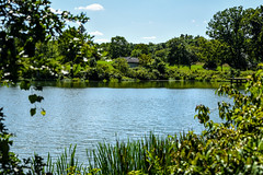 oh what a beautiful day! (Dotsy McCurly) Tags: beautiful day nature lake pond water blue sky clouds dof bokeh nikon d750 nj