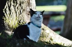 My little grinch (lisheeny) Tags: cat pet animal feline black white