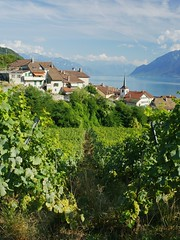 Riex through the vines (Riex) Tags: vineyards vignoble vignes ete summer landscape paysage riex lavaux village vaud suisse switzerland a900 amount 35mm f2 af minoltaamount minolta