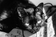 Cat in a box (gregory.sevin) Tags: colombes ledefrance france fr